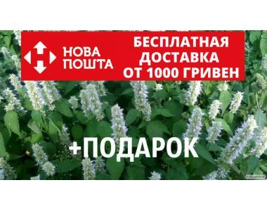 Лофант тибетский семена 20 шт корейская мята Agastache rugosa