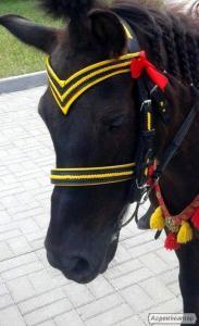 вуздечка для коні і поні