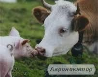 Реалізація кормів власного виробництва для всіх видів тварин .