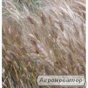 Семена ячменя озимого - сорт Зимний