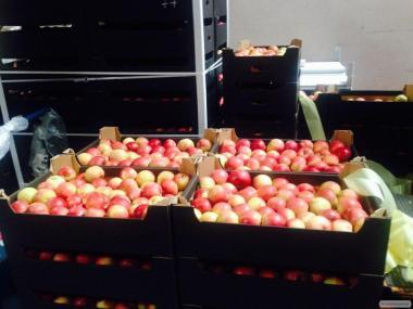 Продам польські Яблука за ціною виробника, оптом