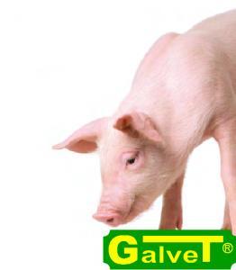 Комбікорми для свиней