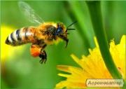 Пчелосемья, пчелосемья
