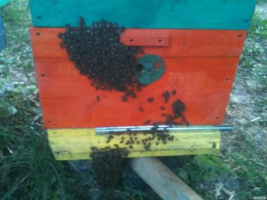 Продам бджолопакети Вінницька обл
