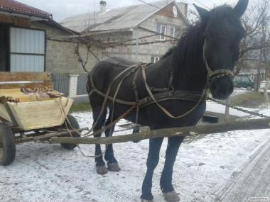 Продам коня 9 лет