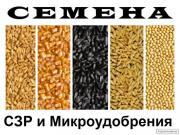 Насіння від кращих виробників (соняшник, кукурудза, ріпак)
