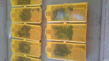 пчелопакеты, бджолопакеты , пчелы, на 300 рамку.