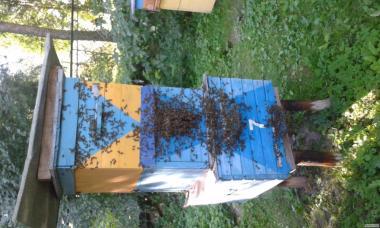 Продаємо квітковий мед.