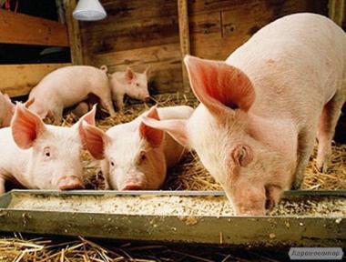 Комбікорм для свиней До -55 (відгодівлю)