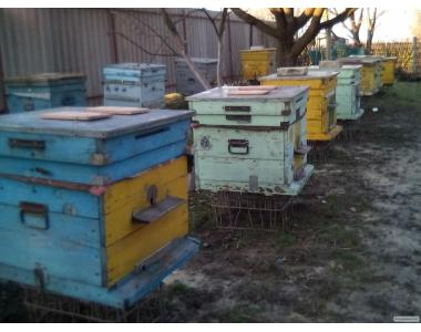продам бджолосім'ї в кінці квітня-початку травня.