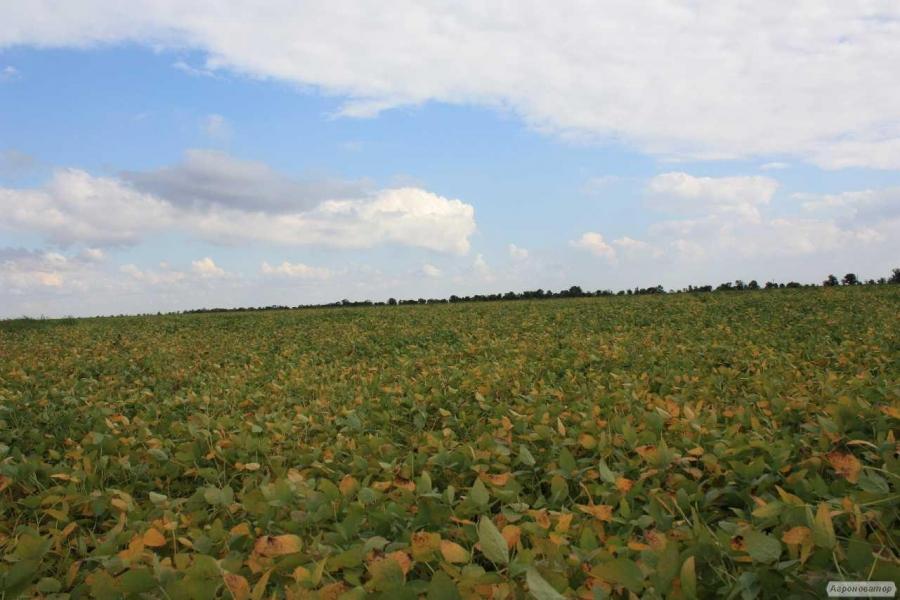 Семена посевной сои сорт Apollo (Аполло), устойчивого к гербициду