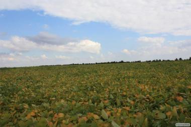 Семена посевной сои сорта Apollo (Аполло), устойчивого к раундапа