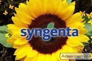 Семена подсолнечника COLOMBI CRU, Сингента