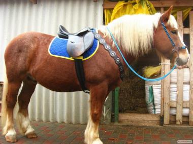 Нарядный конь хобби-класса.
