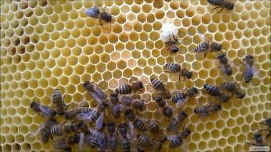 Продам пчелосемьи НЕДОРОГО.