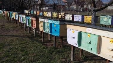 Продам бджолопакети. Продам бджолопакети.