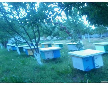 Продам пчелопакеты четырех и шести рамочные в большом количестве