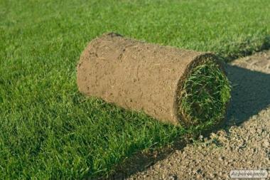 Осуществляем   продажу рулонного газона в  Харьков