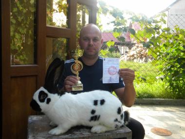 Продаються кролі породи : Німецький Строкатий Велетень (строкач)