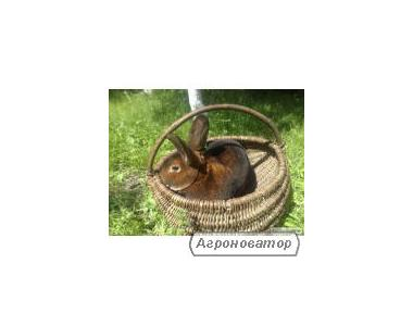 Кролі рекс велетні бабочка серебристі панон