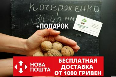 Семена грецкий орех сорт