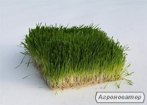 Гідропонний зелений корм