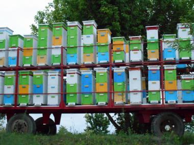 Продам пчелопакеты (пчелопакеты) карпатской породы