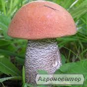 Заморожені гриби: підосичник (є і цілий кубик)