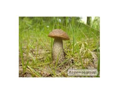 Замороженные грибы: подосиновик (есть целый и кубик)
