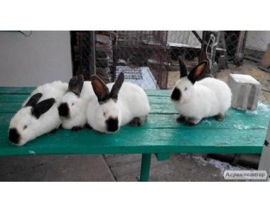 продам кролики,тушки,шкуры