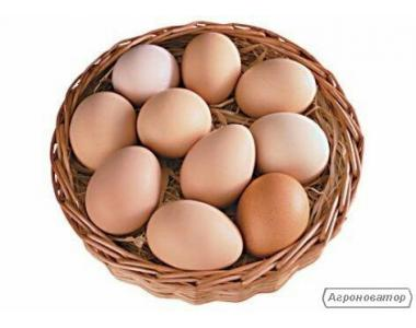 Продаж яєць