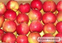 Реализуем яблоко сезонное