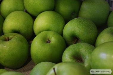 Продам яблука врожаю 2018 р.