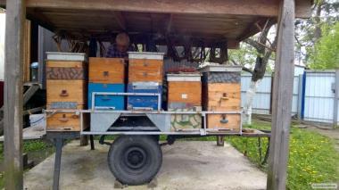 Продам пчелосемьи с собственной пасеки.