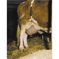 Обладнання для скотарства
