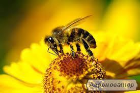 Продам пчелопакети