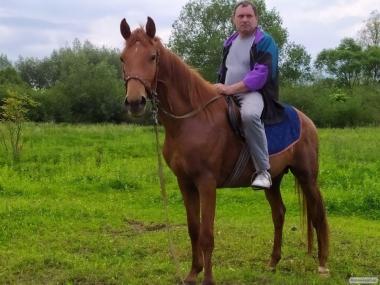Кінь Українська Верхова