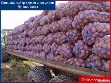 Продаем картофель  оптом от производителя. Низкая цена