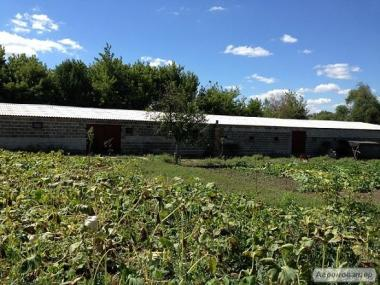 Тваринницька ферма з житловим будинком на природі без турбот
