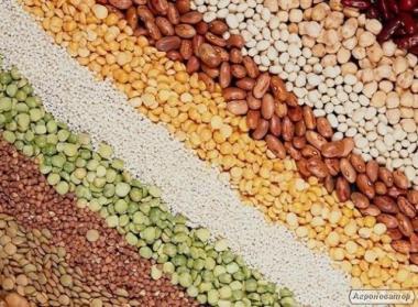 Кукурудза, пшениця, соя, ріпак, соняшник, ячмінь