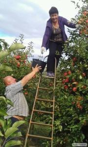 Продам яблука оптом 500 тн