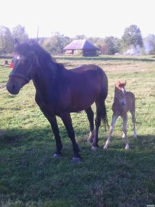 продам коней по акційній ціні