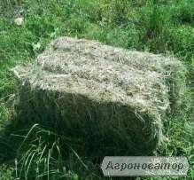 Продам сено луговое в тюках