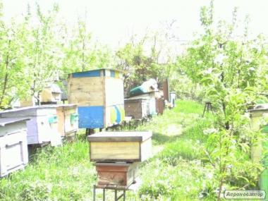 Продаж бджолопакетів 2019г