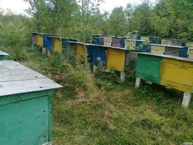Бджолосім'ї, бджолопакети можлива доставка