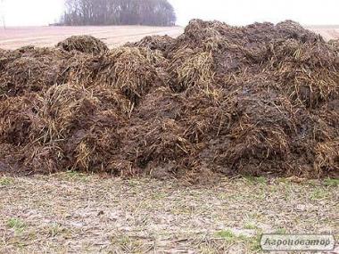 органическое удобрения компост перегной корови