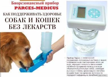 Лечение домашних животных при помощи структурированной воды