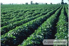 Продам земля сільськогосподарського призначення