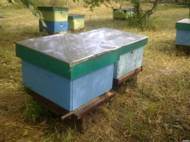 Продам бджолосім'ї (карніка, бекфаст), пасіку