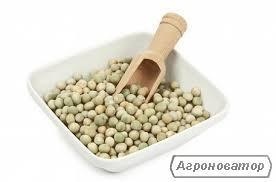продаем горох в Черниговском р-не, Черниговской области